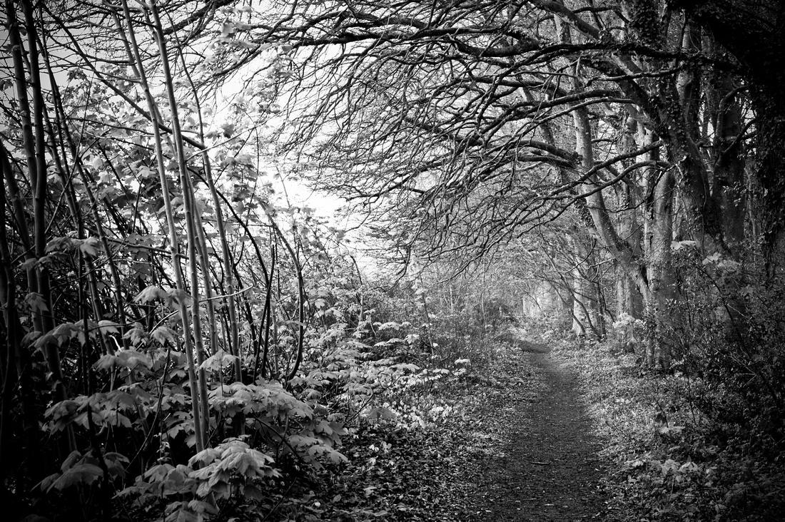 Hidden Path.