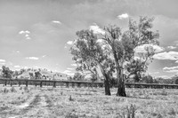 Gumtrees and Wooden Bridges Gundagai